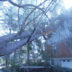 Tree on power lines in Sleepy Hollow