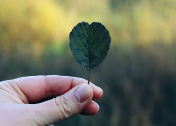 Leaf and hand image