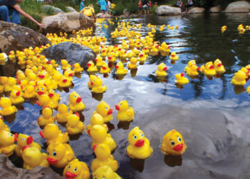 Rubber Duckies at the Duck Derby in Tarrytown's Patriot Park